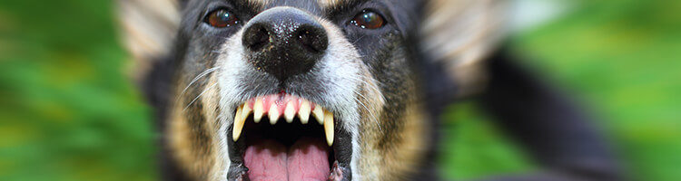 Abogados de Accidentes por Mordedura de Perro
